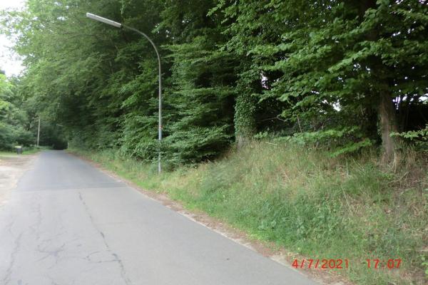 Waldesrand